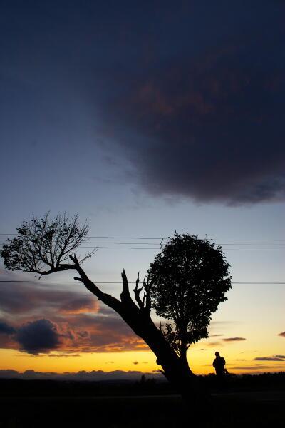 道路脇の蝦夷山桜