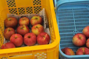2012.01.21_りんごの日3