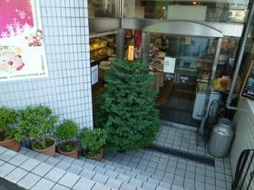 2011.11.30_モミの木