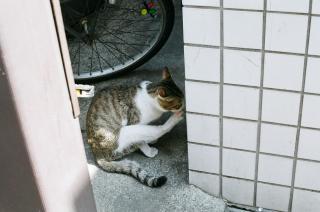 野良猫ちゃん