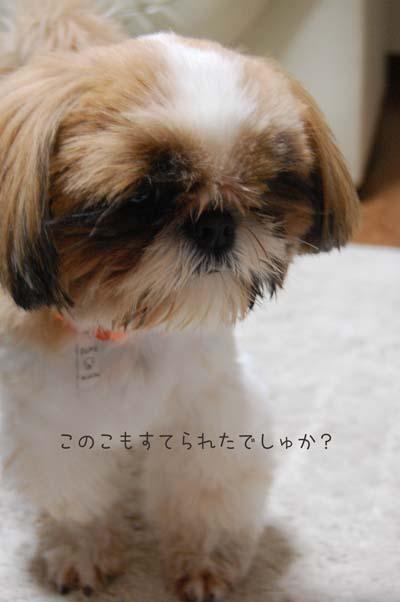 DSC_0731a_20090904205528.jpg