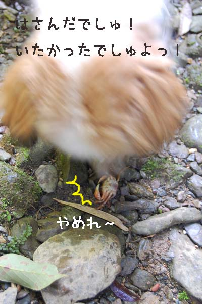 DSC_0773a.jpg