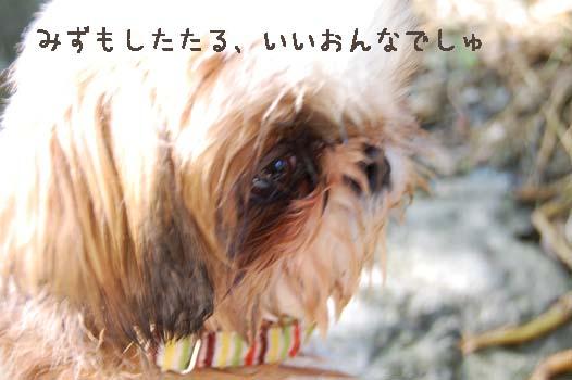 DSC_0776a_20090616001957.jpg