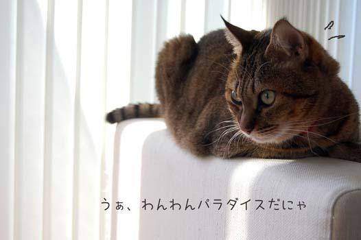 DSC_1009a.jpg