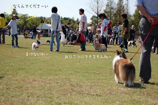 DSC_1371a.jpg