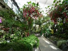 福岡市植物園~温室