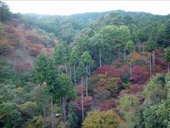 油山市民の森