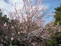 宮ノ陣神社