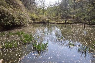 フィルム写真-森の池1