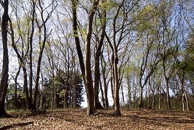 フィルム写真-雑木林