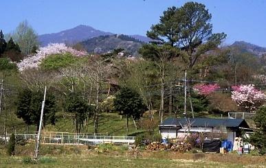 フィルム写真-里山