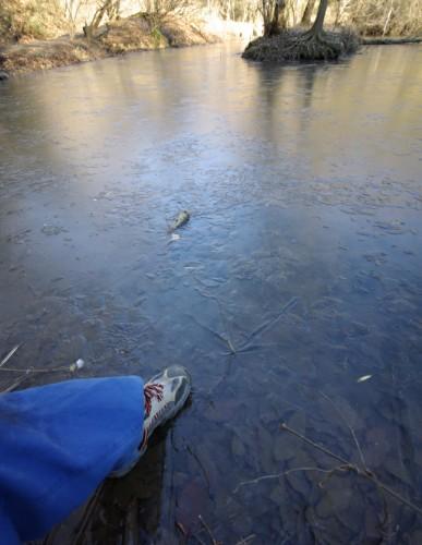 凍った池1