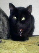 E3828AE383BC黒猫リー