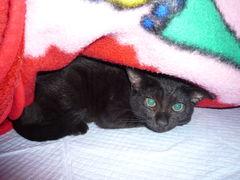 32057430_892922174s黒猫さわ2