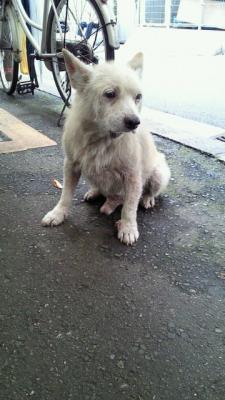 200907281636001クリーム犬1