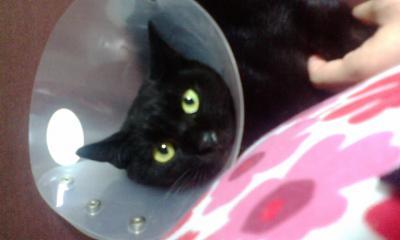F1000163黒猫2。。。。