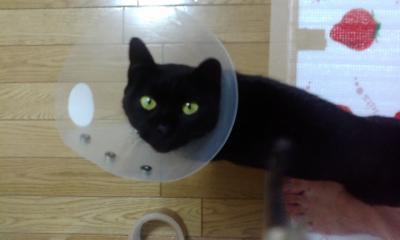 F1000175黒猫4