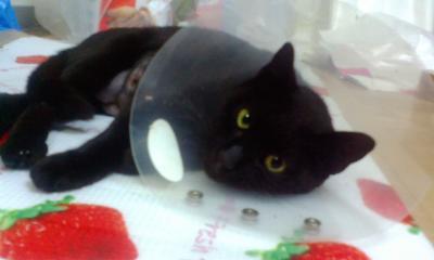 F1000186黒猫5