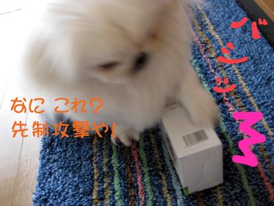 IMG_2310.jpg