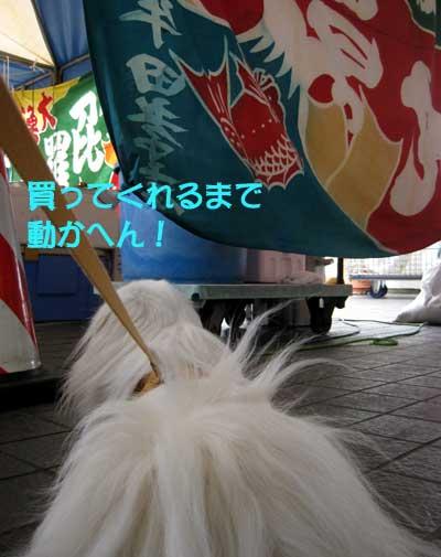 IMG_3325.jpg