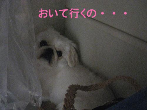 IMG_49522.jpg