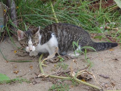 20080826 仔猫ちらり