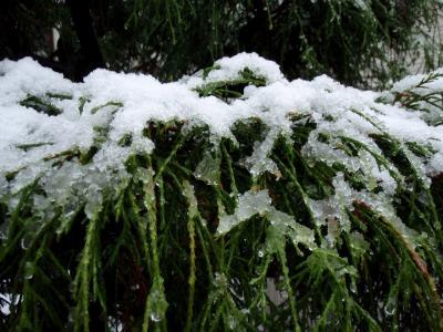 20081119 初雪