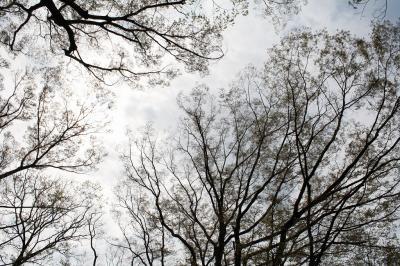 200905 公園の木2