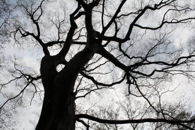 200905 公園の木4