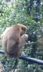 しょんぼり猿