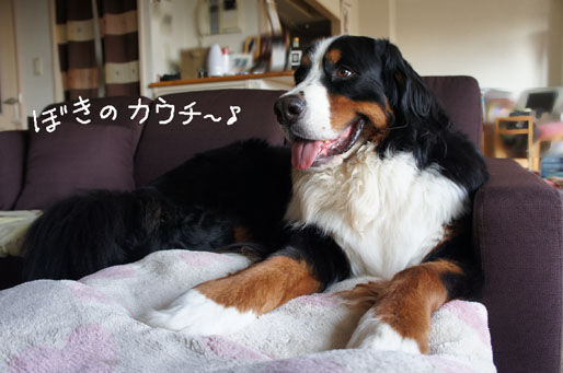 kauchi.jpg