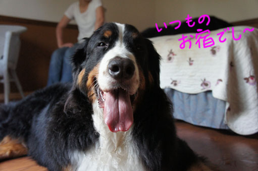 oyado_20111025234640.jpg