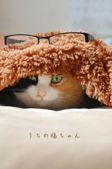福と眼鏡。