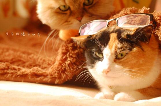 福と眼鏡と琥珀。