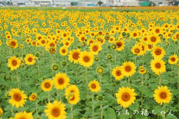 新田花トピア