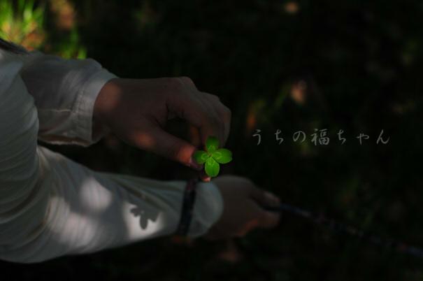 福と想い出のハス園
