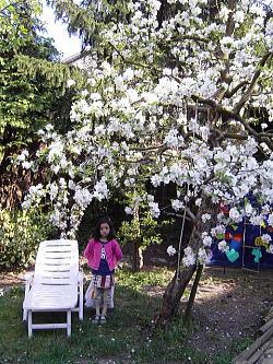 うちの庭のりんごの木が満開♪