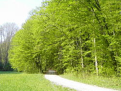 森に朝から散歩