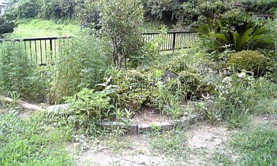8-9南の庭