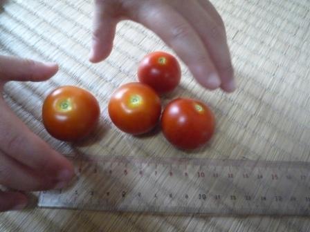 ばあばのベランダトマト