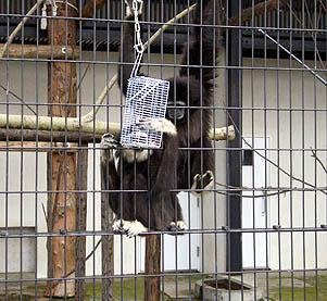 ezo2008_02.jpg