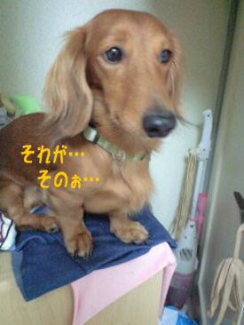 25_20081009202519.jpg