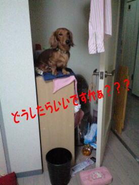 27_20081009202545.jpg