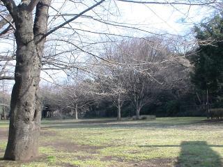 赤塚公園の広場