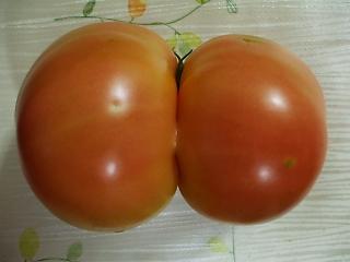 結合双生トマト1