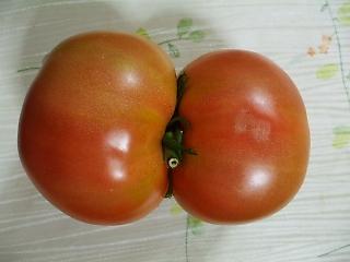 結合双生トマト2