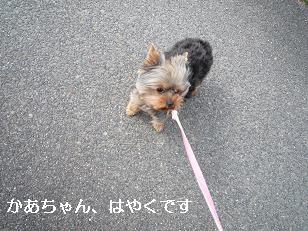 2009_0226 デジカメ写真0048