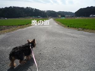 2009_0226 デジカメ写真0054