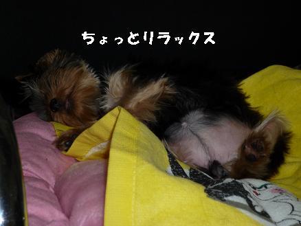 コピー ~ リラックス