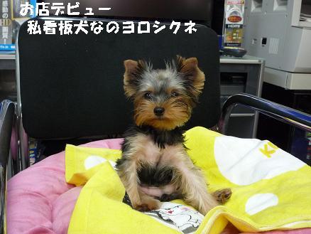 コピー ~ 看板犬